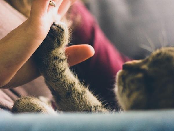 Briga o kućnim ljubimcima